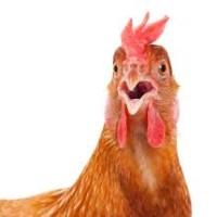 /home/lecreumo/public html/wp content/uploads/2017/07/chicken